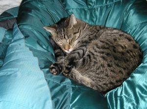 Our cat Sandor