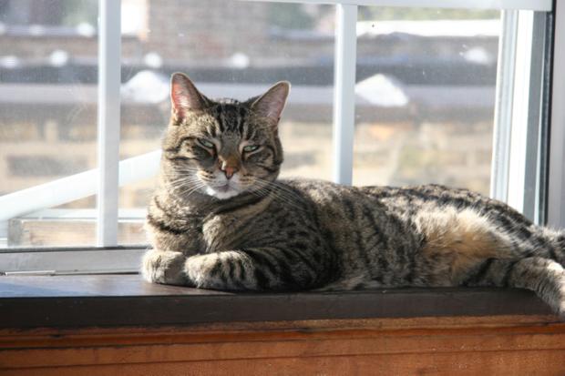 Sandor Cat
