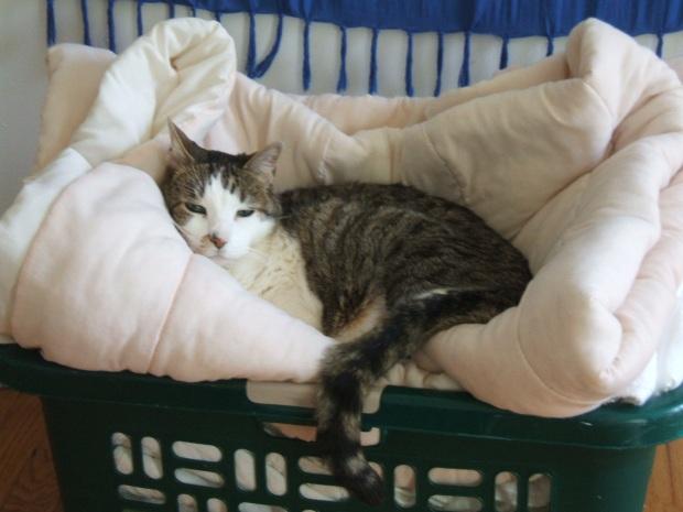 Kalman Cat